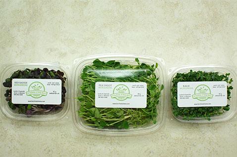 sample mix microgreens subscription