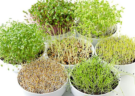 microgreen veggies